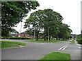 SE3635 : Penda's Grove, south side by Christine Johnstone