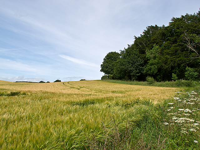 Field boundary near St Martins