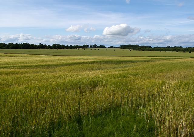 Farmland near Cairnbeddie