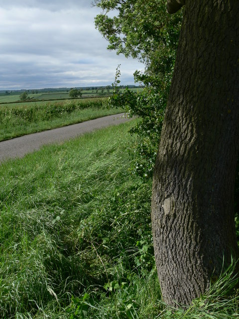 Tree along Gaddesby Lane