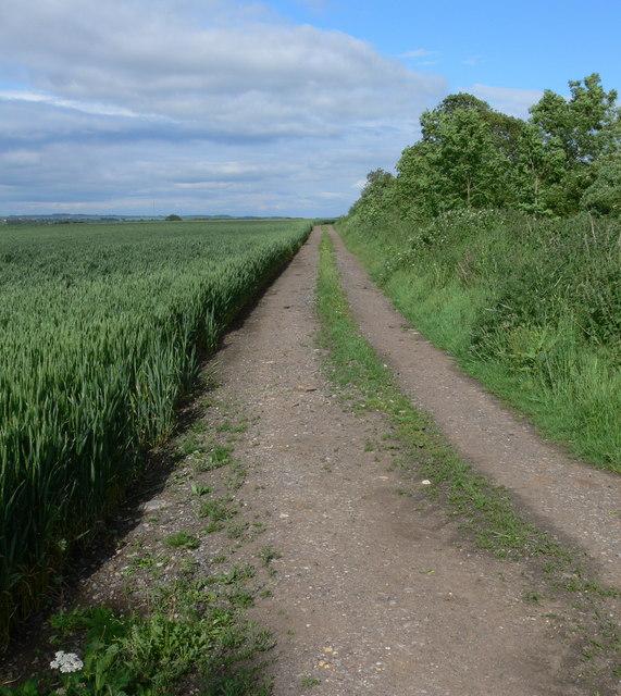 Farm track at Bran Hills