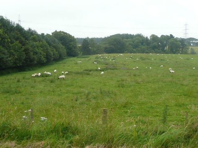 Whaupmoss Plantation