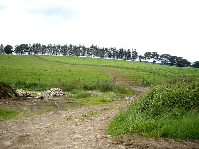 Drain and field track near Reekie