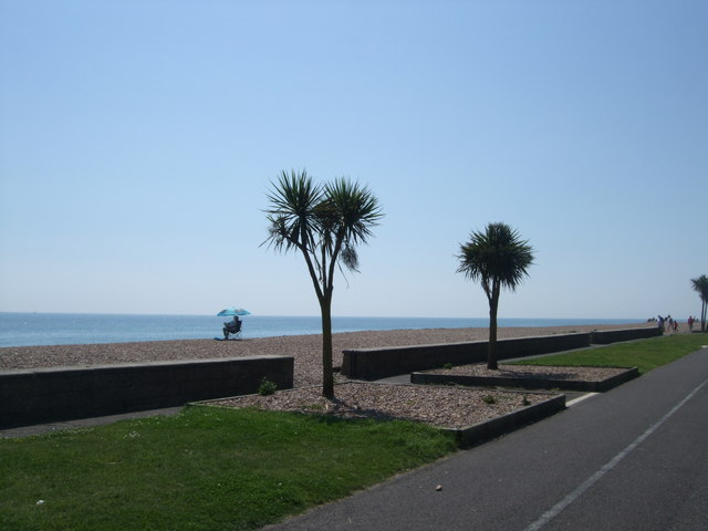 Pine trees on Worthing Seafront