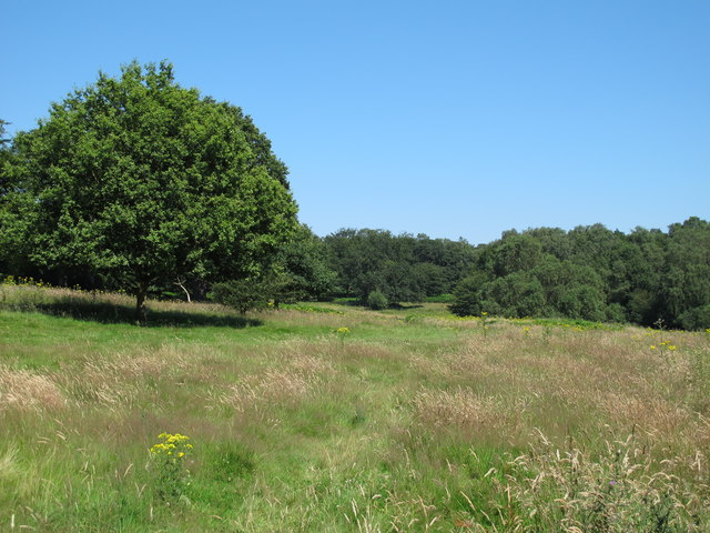 Grazing field