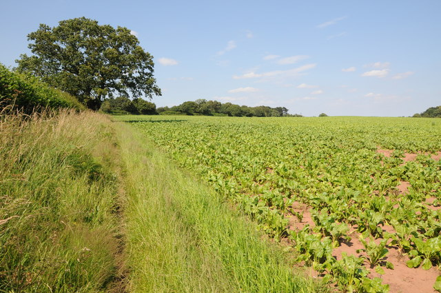 Bridleway and field headland