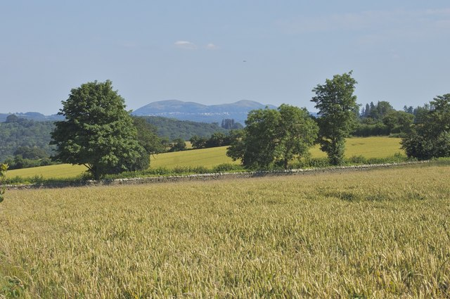 Wheat field with Malvern Hills