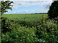 SK6916 : Field boundary along the Leicestershire Round Footpath by Mat Fascione