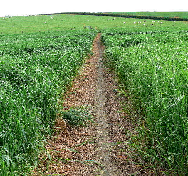 Footpath through the crops