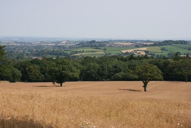 Helliar's Copse and Ilminster