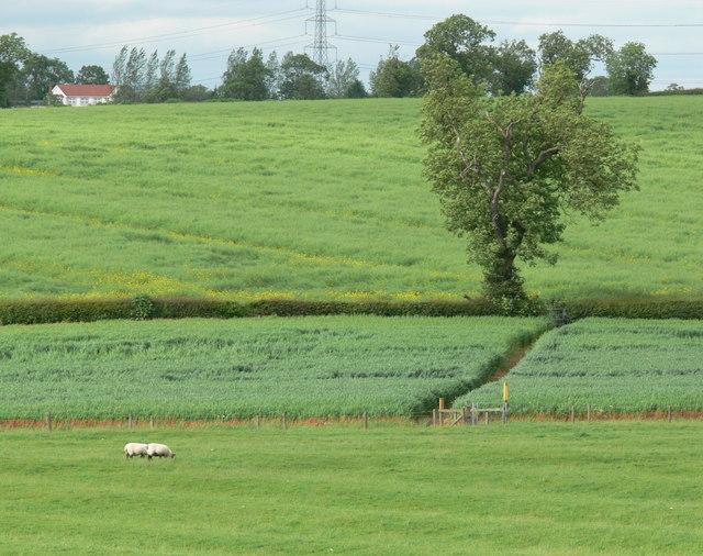 Farmland near Frisby Grange