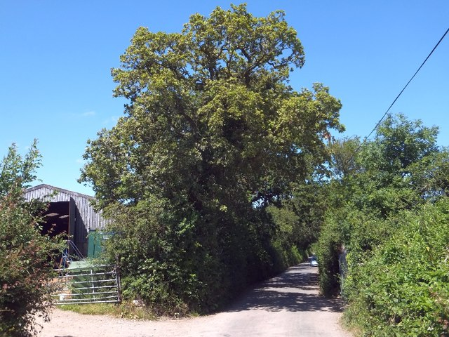 Barn and road near Combeshead Copse
