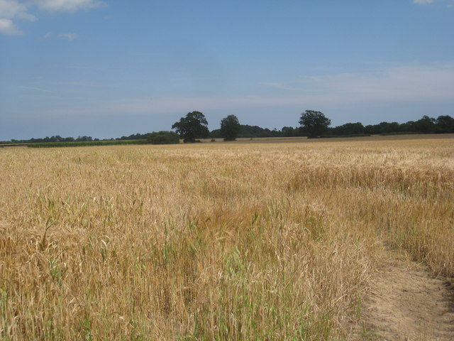 Barley field near Castle Carlton