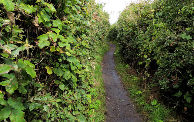 Path, Rough Island near Comber (2)