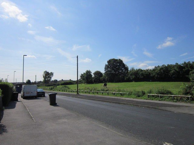 Grazing horses on Thorpe Road, Middleton
