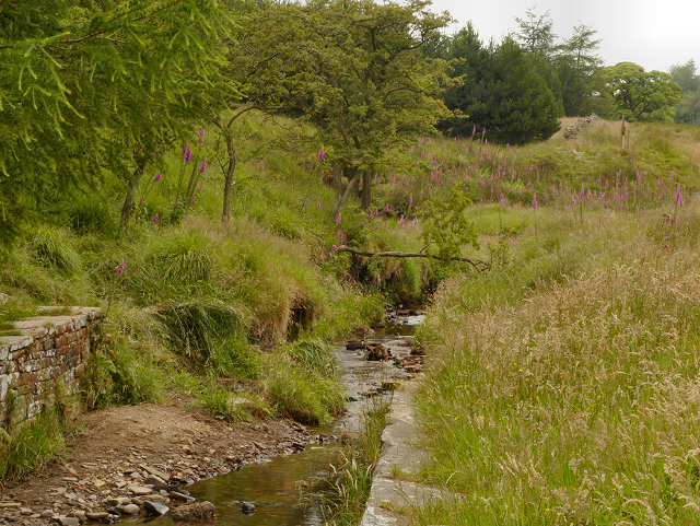 Stream, Haslingden Grane
