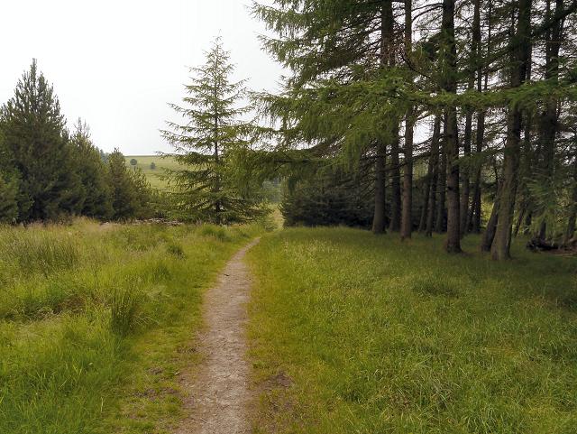 Woodland Path, Haslingden Grane