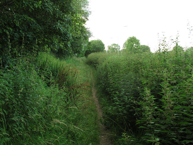 Nettles alongside the Sandbach Bypass