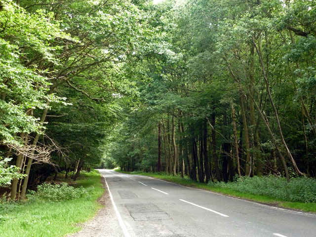 Blackmore Road in the woods