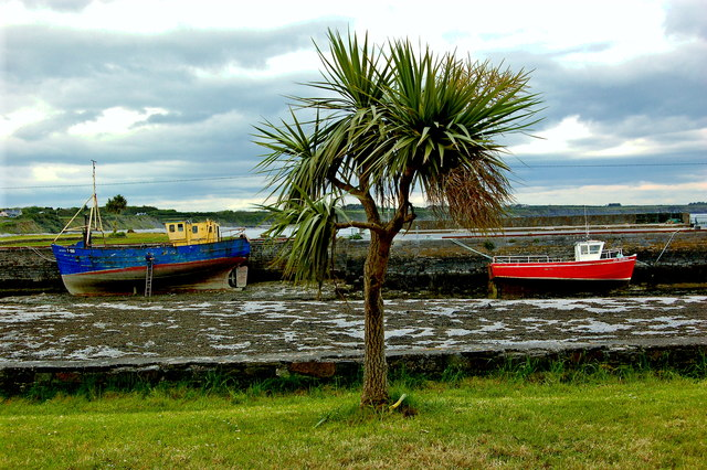 Loop Head Peninsula  - Carrigaholt - Harbour - Palm Tree & Two Boats