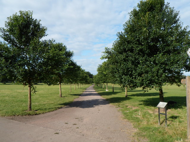 Tree-lined path through Pontcanna Fields, Cardiff