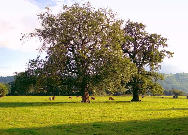 Parkland, Letton Court