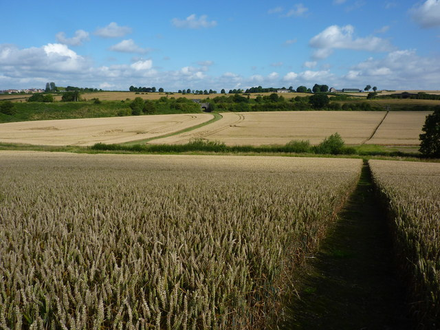 Barley ripening, east of Staveley