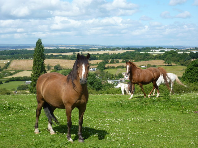 Ponies on the edge of Clowne