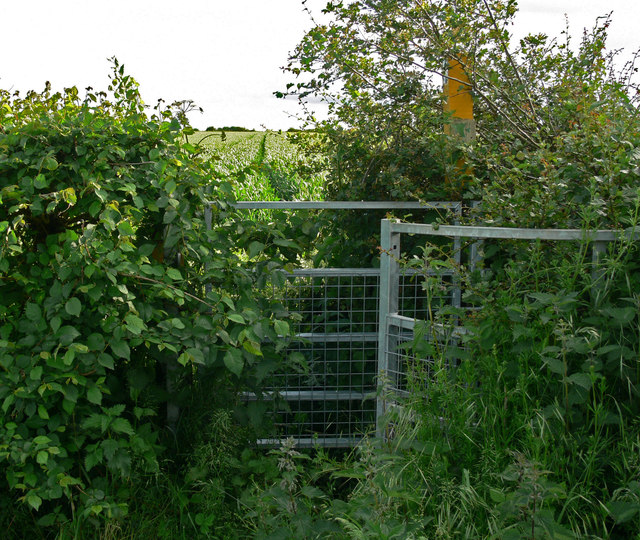 Overgrown kissing gate