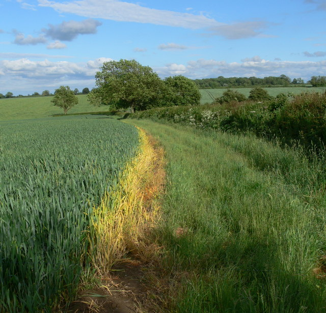 Field boundary near the Leicestershire Round Footpath
