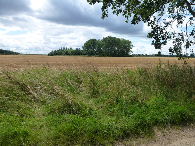 Farmland and copse near Leicester Square Farm