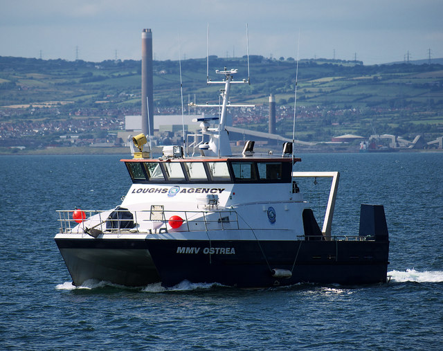 The 'MMV Ostrea' in Bangor Bay