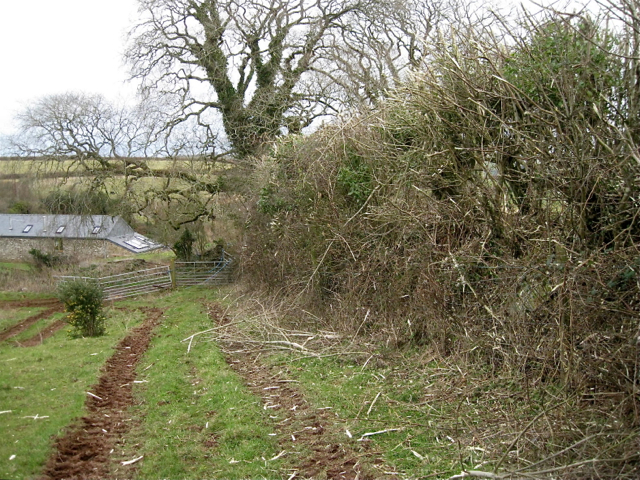 Flailed hedge near Lapthorne Farm