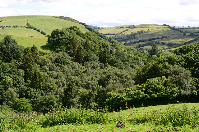 Wooded valley below Banhadlog Hall