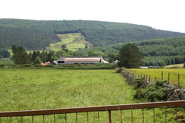 Bogfern farm