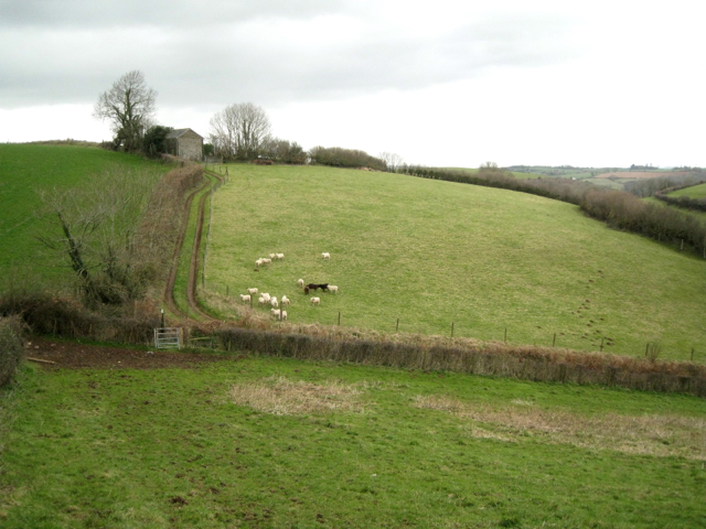 Sheep in a field below a barn