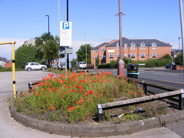 Brierley Poppies
