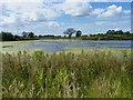 SJ7818 : Wetland near Outwoods : Week 31