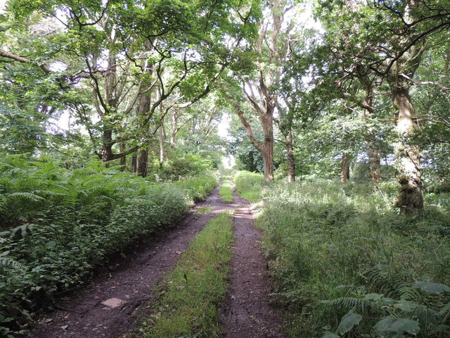 Southern Upland Way in Lime Kiln Wood