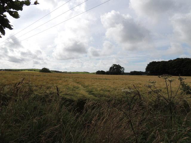 Farmland near Guyon's Brae