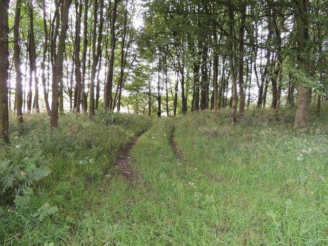 Guyon's Brae Wood