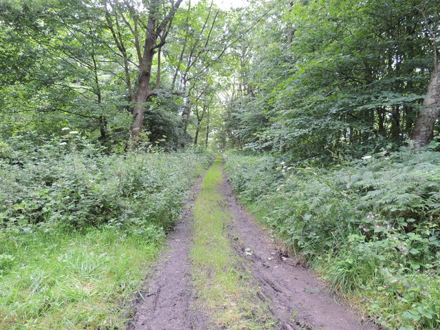 Southern Upland Way in Guyon's Brae Wood