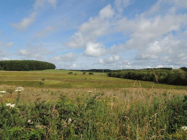 Woodland near Culhorn Loch