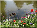 TQ8110 : Ducks at Alexandra Park by Oast House Archive