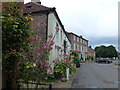 TF8342 : Hollyhocks and houses in Burnham Market by Richard Humphrey