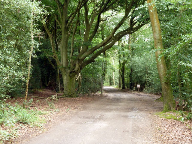 Track on Woolbeding Common