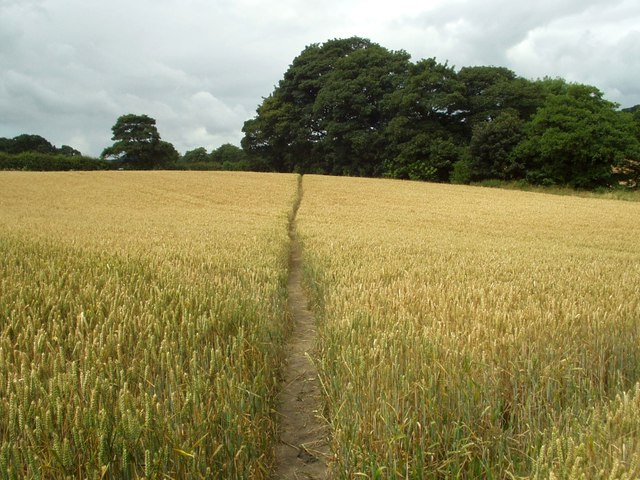 Kirklees Way to Flockton