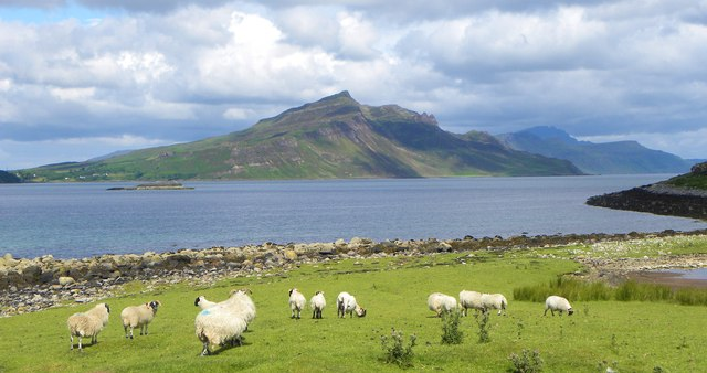 Sheep grazing on An Aird