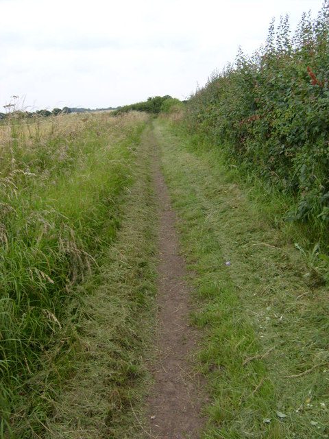 Recently cleared bridleway near Hutton Buscel