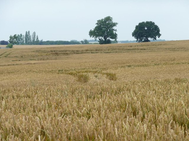 Trees and wheat in Low Field
